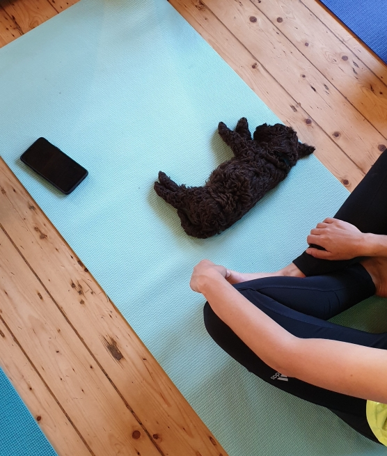 Pets Yoga with cockapoo puppy