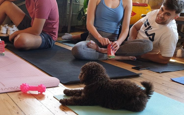 Pets Yoga puppy yoga London