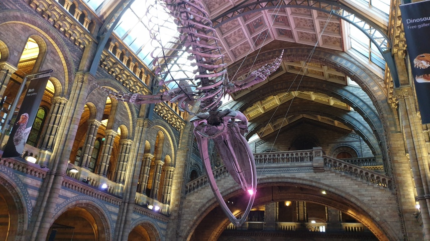 Yoga at Natural History Museum under blue whale skeleton